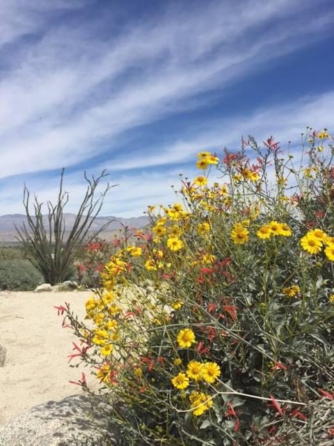 Respite in the Desert.jpg