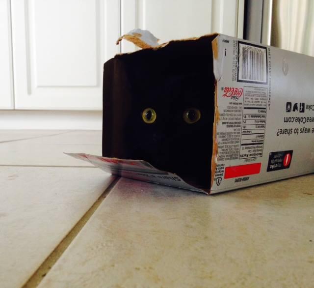 Weejie in Box.jpg